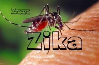 """""""Zika"""" virusunun Azərbaycana heç bir təhlükəsi yoxdur - RƏSMİ"""