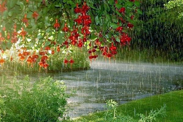 Sabahın havası: Bəzi rayonlarda yağış yağacaq