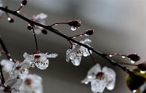 Sabah yağış yağacaq, şimşək çaxacaq