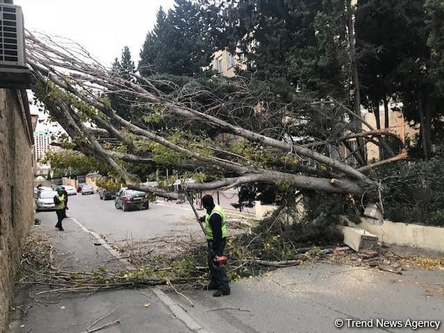 Bakıda külək 14 ağacı aşırıb