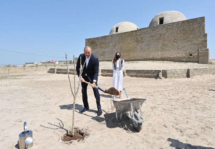 Prezident və xanımı Pirşağıda ağac əkiblər -  FOTO