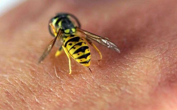 Qazaxda arıçı arı sancmasından öldü