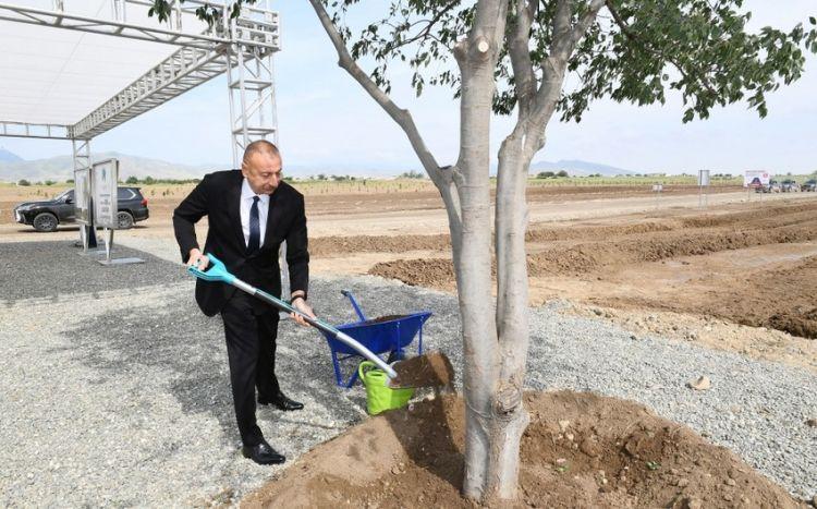Prezident Ağdam şəhər meşə-parkında ağac əkib -  Yenilənib