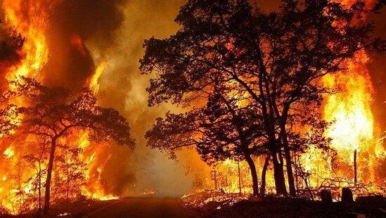 Dünya yanır:  40 ölkədə meşələr kül olur...