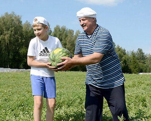 Lukaşenko həyətində qarpız yetişdirir -  FOTO